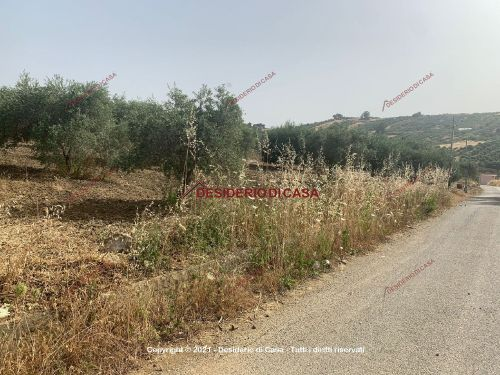 Terreno / Non edificabile / agricolo In Vendita