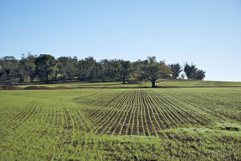 Terreno in vendita a Bagnoregio, 9999 locali, prezzo € 220.000 | CambioCasa.it