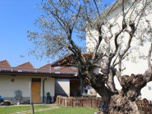 Case con piscina in Area Busto Arsizio-Castellanza, Varese