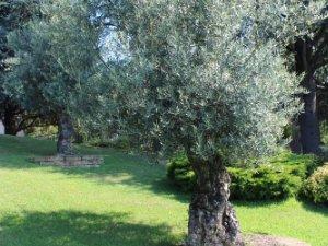 Giardini Moderni Borgomanero : Case con piscina a borgomanero novara u idealista